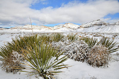Photograph - Snow Covered Yucca Near Book Cliffs by Ray Mathis