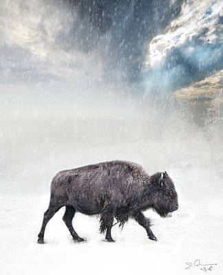 Photograph - Snow Day Buffalo by Evie Carrier