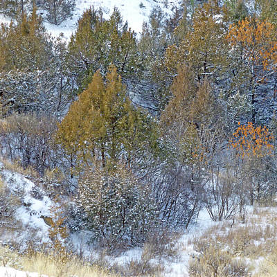 Photograph - Snow-dusted In West Dakota by Cris Fulton