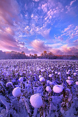 Royalty-Free and Rights-Managed Images - Snow Flowers by Phil Koch