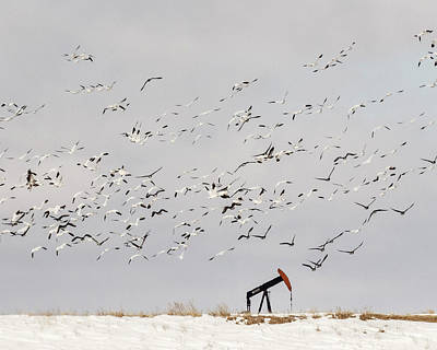 Photograph - Snow Geese Over Oil Pump 01 by Rob Graham