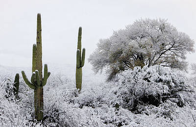 Photograph - Snow In The Desert by Elaine Malott