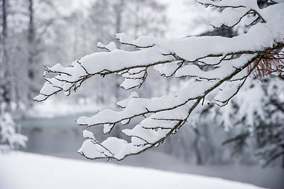Photograph - Snow On A Branch by Ed Taylor
