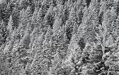 Photograph - Snow On Evergreens by Tom Gresham