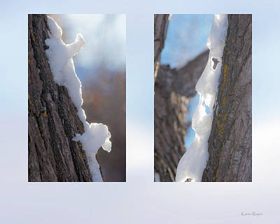 Photograph - Snow On Poplar Tree by Karen Rispin
