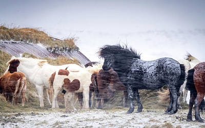 Photograph - Snow Storm Horses by Framing Places