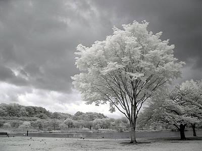 Photograph - Snow Tree by Yaplan