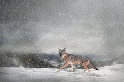 Photograph - Snow Trekker by Jai Johnson