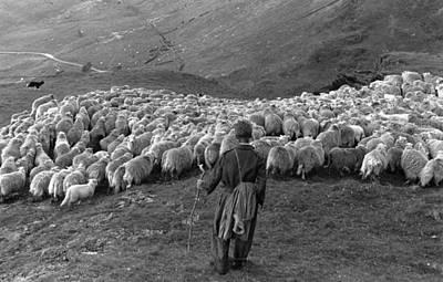 Snowdonia Sheep Art Print by Grace Robertson
