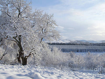 Photograph - Snowfall At Ballindalloch by Phil Banks