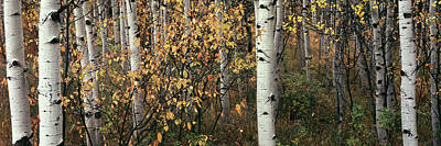 Photograph - Snowmass Fall  by Tom Cuccio