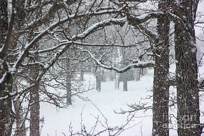Photograph - Snowstorm With Old Trees by Kevin McCarthy