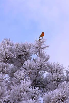 Animals Photos - Snowy Birdy by Kadek Susanto