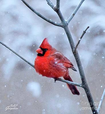 Digital Art - Snowy Cardinal by CAC Graphics