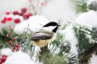 Mixed Media - Snowy Chickadee Bird by Christina Rollo