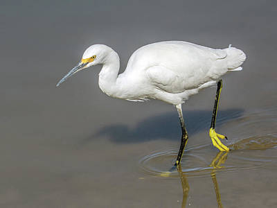 Photograph - Snowy Egret 3760-112317-1cr by Tam Ryan