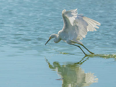Photograph - Snowy Egret 3889-101018-cr by Tam Ryan