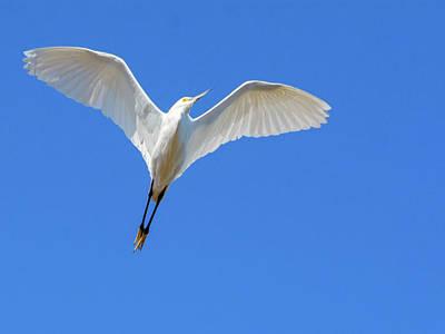 Photograph - Snowy Egret Flight 8973-110918-1cr by Tam Ryan