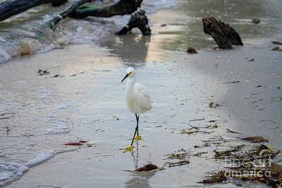 Photograph - Snowy Egret by Susan Rydberg