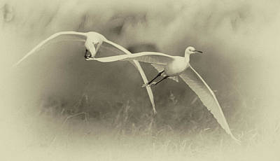Photograph - Snowy Egrets 9390-111118-3cr by Tam Ryan