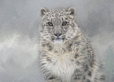 Photograph - Snowy Gaze by Kelley Parker