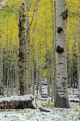 Art Print featuring the photograph Snowy Gold Aspen by Gaelyn Olmsted