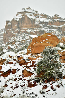 Photograph - Snowy Morning At East Entrance Of Colorado National Monument by Ray Mathis
