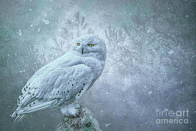 Photograph - Snowy Owl In Winter by Brian Tarr