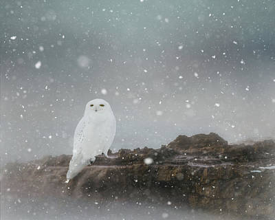 Photograph - Snowy Owl On A Ledge by Gloria Anderson