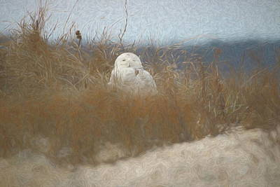 Photograph - Snowy Owl Painted by Karen Silvestri
