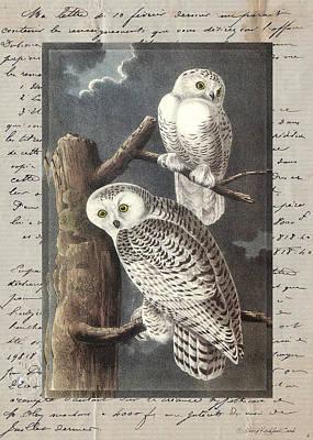 Digital Art - Snowy Owls by Terry Kirkland Cook
