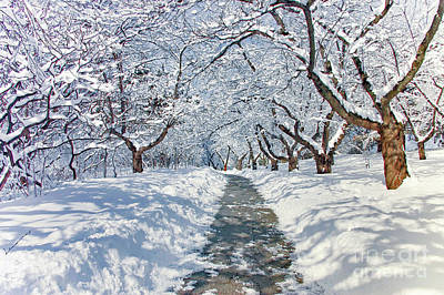 Photograph - Snowy Path by Elaine Manley