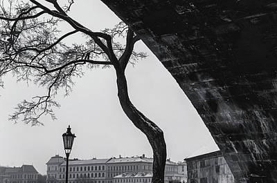 Photograph - Snowy Prague. Tree Under Bridge by Jenny Rainbow