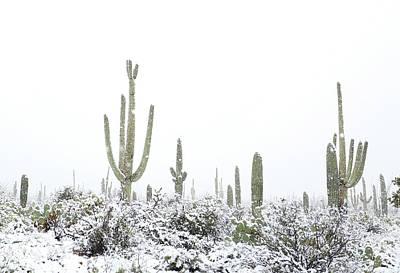 Photograph - Snowy Saguaro Cactus by Jean Clark