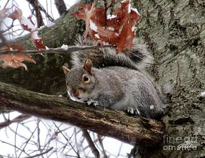 Photograph - Snowy Squirrel 2 by CAC Graphics