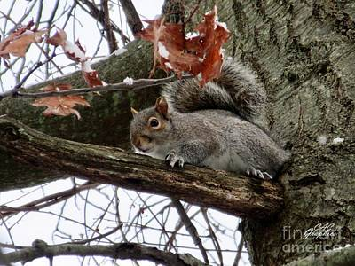 Photograph - Snowy Squirrel  by CAC Graphics