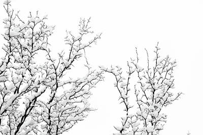 Photograph - Snowy Tree Branches by Jeanette Fellows