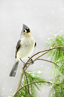 Mixed Media - Snowy Winter Songbird by Christina Rollo