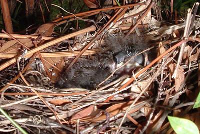 Belinda Landtroop Photos - Snuggling Time by Belinda Landtroop