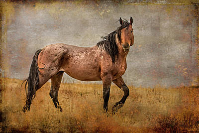 Photograph - So Handsome by Mary Hone