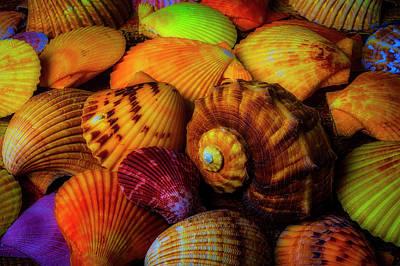 Photograph - So Many Wonderful Shells by Garry Gay