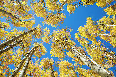 Photograph - Soaring Aspens by Scott Kemper