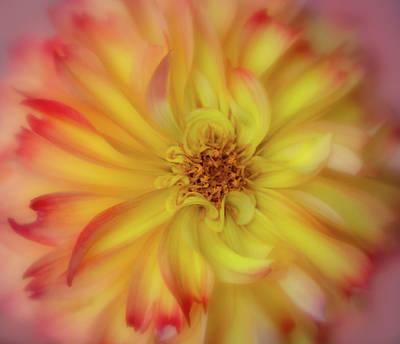Photograph - Soft Curves Dahlia by Mary Jo Allen