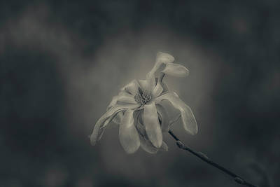 Photograph - Soft Flower by Roberto Pagani