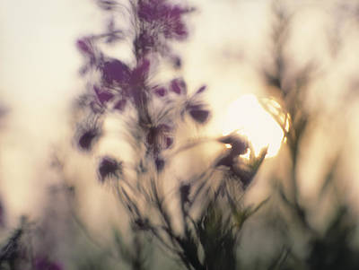 Photograph - Soft Focus Image Of A Sunrise With by Dutchy
