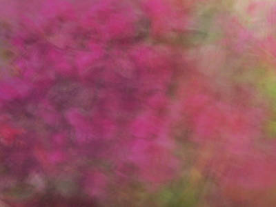 Photograph - Soft Pastel Flower Like Abstract And Flowing Blurred Design Of Pinks And Greens by Teri Virbickis