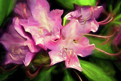 Mixed Media - Soft Rhodie Blooms 6 by Lynda Lehmann