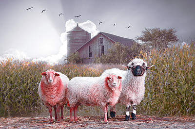 Photograph - Soft Summer Sheep by Debra and Dave Vanderlaan