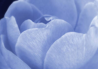 Photograph - Soft Whisper Of A Blue Rose by Johanna Hurmerinta