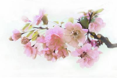Photograph - Softly Spring by Jessica Jenney